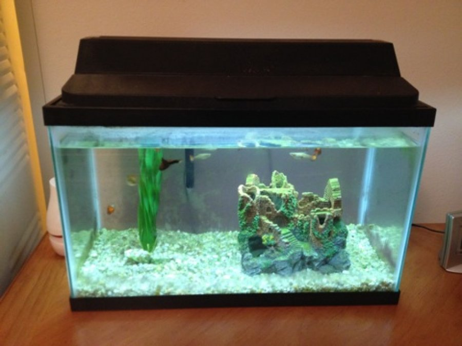 4 fish tanks must go fish included florida port for Travel fish tank
