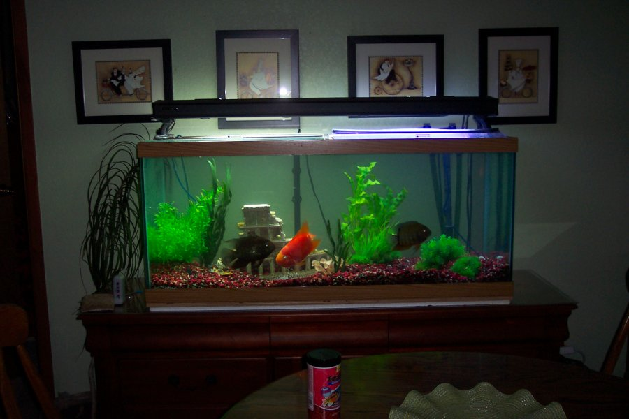 75 gallon aquarium clean. Hooded light with day/moon lighting. Eheim ...