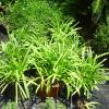 PLANTS CLEARANCE SALE offer Lawn and Garden