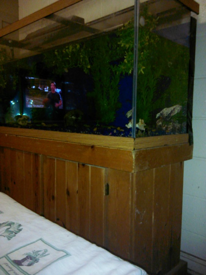Fish tank 500 or best offer norfolk 23523 norfolk for 70 gallon fish tank