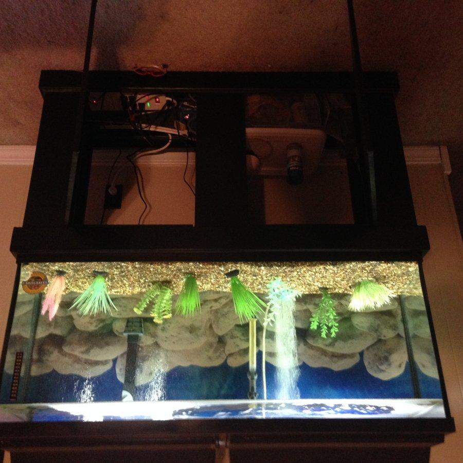 55 Gallon Aquarium St Louis 63017 Residence