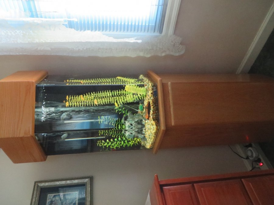 30 Gal Fish Tank Portland 97213 Home And Furnitures