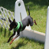 Flyball Classes for dogs